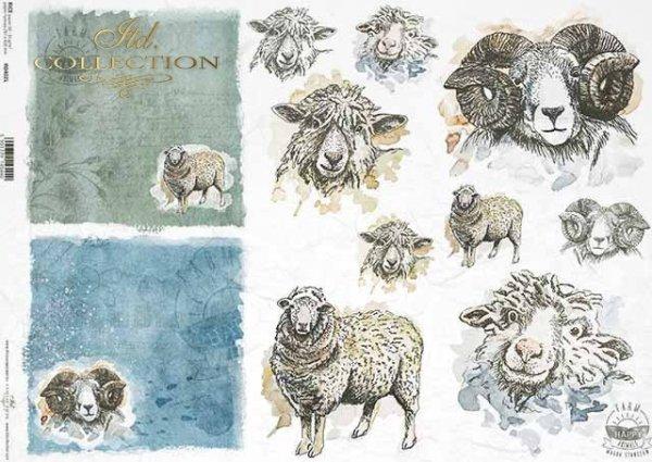 R0402L * owca, baran, głowy owcy, głowy barana, napisy 'happy farm'