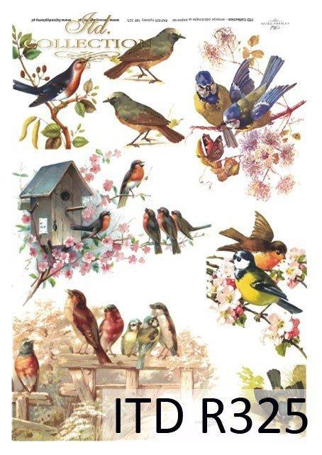 wiosna, kwiaty, budka dla ptaków, ptak, ptaki, sikorki, ptaszki, R325