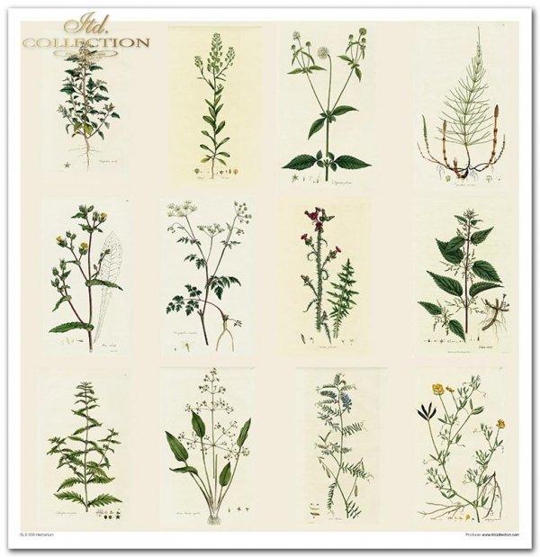 Zestaw papierów do scrapbookingu - Herbarium