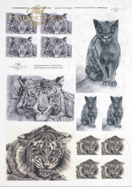 decoupage-zwierzęta-kot-koty-tygrys-grafika-Klaudia-Bezak-R0147