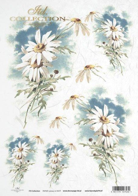 flower, flowers, leaf, leaves, flower petals, spring, R414