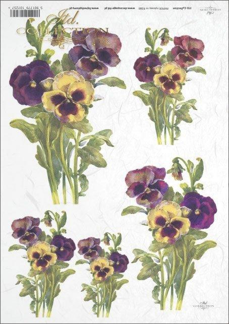 pansies, garden, garden violet, flower, flowers, R386