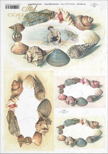 beach, shell, shells, seashell, seashells, sea, holiday, R408