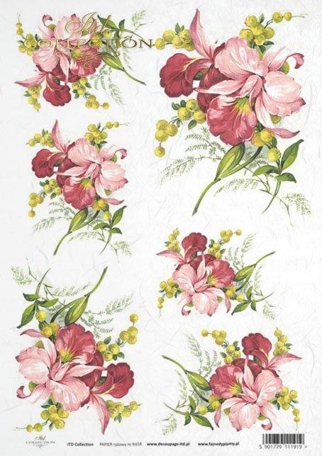 orchid, orchids, flower, flowers, leaf, leaves, flower petals, R418