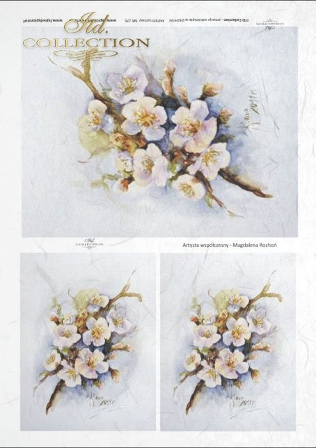 flower, flowers, Magdalena Rochoń, R276