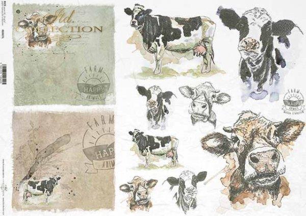 R0407L * łaciata krowa, głowy krowy, napisy 'happy farm'