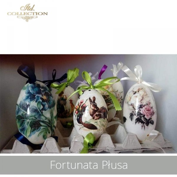 20190424-Fortunata Płusa-R0286 R0748 R0968-example 01