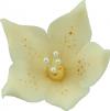 Lilijka Ecru - dekoracja cukrowa 20 szt.
