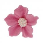 Bodziszek kwiatki cukrowe 10szt wrzosowe