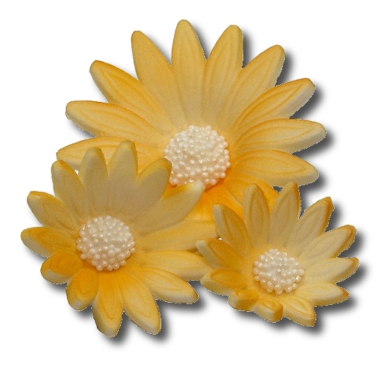 Rumianek żółty 3 wielkości 20 szt.