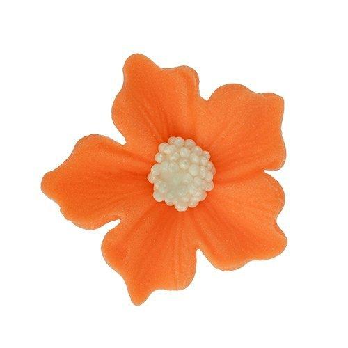 Bodziszek kwiatki cukrowe 10szt pomarańczowe