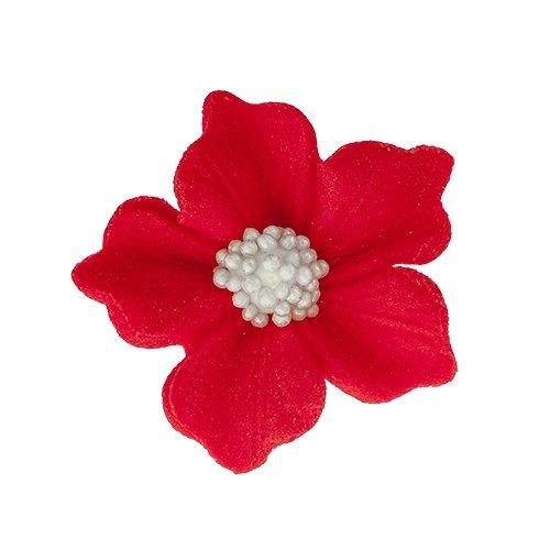 Bodziszek kwiatki cukrowe 10szt czerwone
