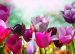 Fototapeta - Piękne wiosenne kwiaty - 254x183 cm