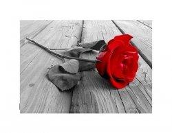 Róża na Pomoście - B&W - reprodukcja