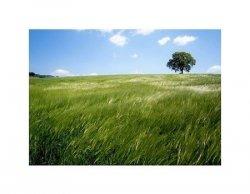 Zielony Krajobraz - reprodukcja
