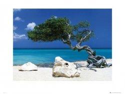 Tom Mackie Divi Divi Tree - reprodukcja