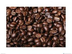 Świeże Ziarna Kawy IV - reprodukcja