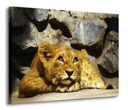 Rozmarzone lwiątko - Obraz na płótnie