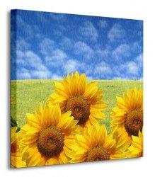 Słonecznikowe pole - Obraz na płótnie