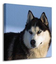 Husky - Obraz na płótnie