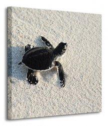 Żółwik - Obraz na płótnie