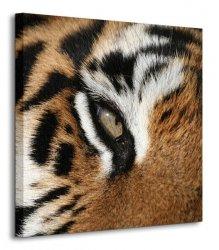 Oko tygrysa - Obraz na płótnie