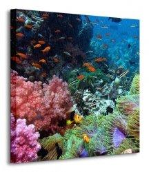 Rafa koralowa - Obraz na płótnie
