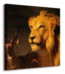 Obraz do sypialni - Sawanna, Lew - 40x40 cm