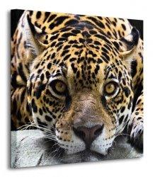 Obraz ścienny - Jaguar - 40x40 cm