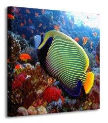Emperor angelfish - Obraz na płótnie