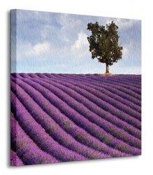 Samotne drzewo, Francja - Obraz na płótnie
