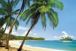 Fototapeta na ścianę - Plaża - Tropiki (Palmy na Plaży) - 366x254 cm
