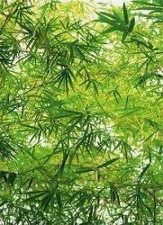 Fototapeta na ścianę  Bambus - 183x254 cm
