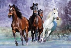 Konie w biegu - plakat