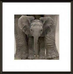 Obraz na ścianę - Baby Elephant - 40x40cm