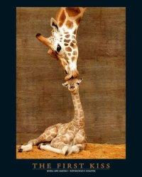 Pierwszy pocałunek - plakat