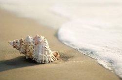 Fototapeta do sypialni - Muszla na Plaży - 175x115 cm
