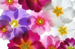 Fototapeta na ścianę - Przeźroczyste Kwiaty - 175x115 cm