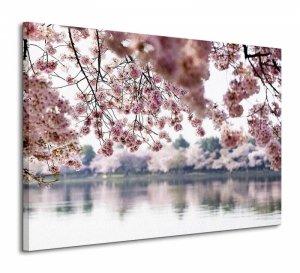 Kwiaty wiśni - Obraz na płótnie