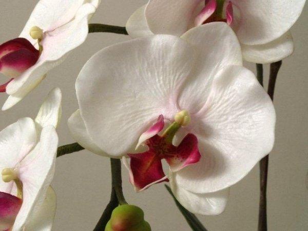 Sztuczne storczyki - Orchidea w doniczce - sklep internetowy decoart24.pl