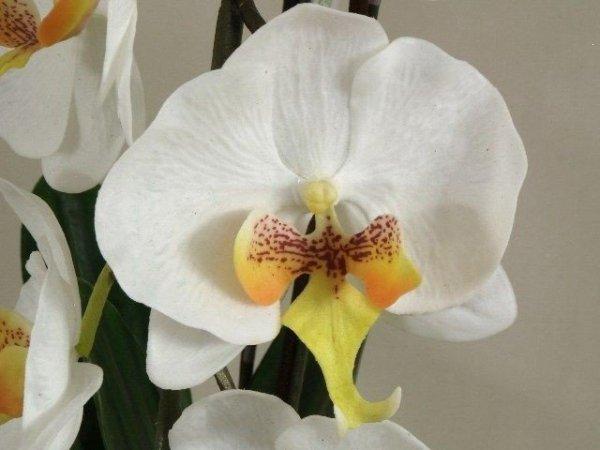 Storczyki sztuczne - Orchidea - W doniczce - Sklep internetowy Decoart24.pl