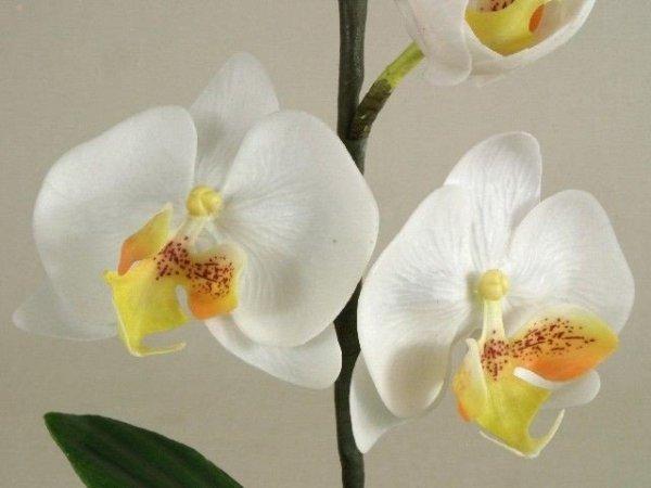 Storczyki sztuczne - Orchidea -  W kubku - Decoart24.pl