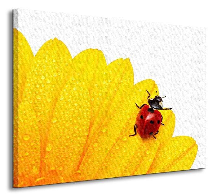 Biedronka Obraz Na Płótnie Zwierzęta Natura Obrazy Na ścianę Na Płótnie