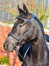Stubben Freedom ogłowie anatomiczne dla konia